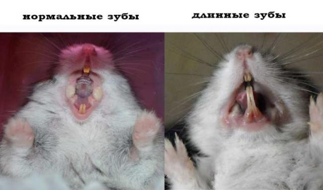 pochemu-homyak-gryzet-kletku-i-kak-ego-otuchit-13.jpg