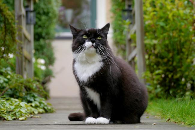 Animals___Cats_____Black_and_white_cat_087920_.jpg