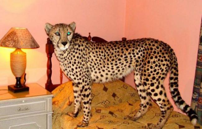Gepard20.jpg