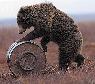 kamchatskiy-buryy-medved-s-bochkoy.jpg