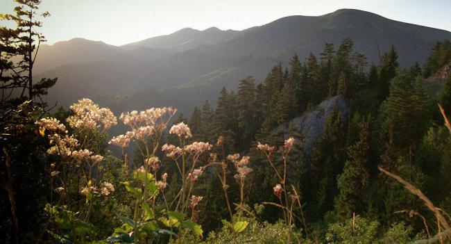 prirodnye-zony-lesov-30.jpg