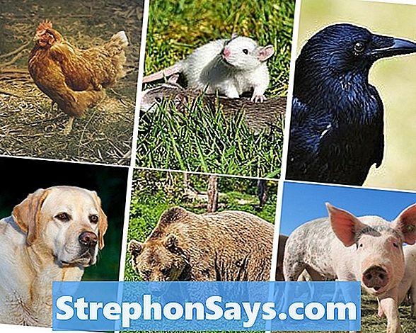 difference-between-herbivores-carnivores-and-omnivores-1.jpg