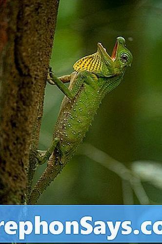 difference-between-salamander-and-lizard-1.jpg