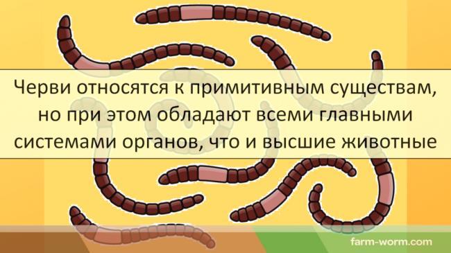 Pochemu-dozhdevye-chervi_002_CHervi-otnosyatsya-k-primitivnym-sushhestvam-1024x576.png
