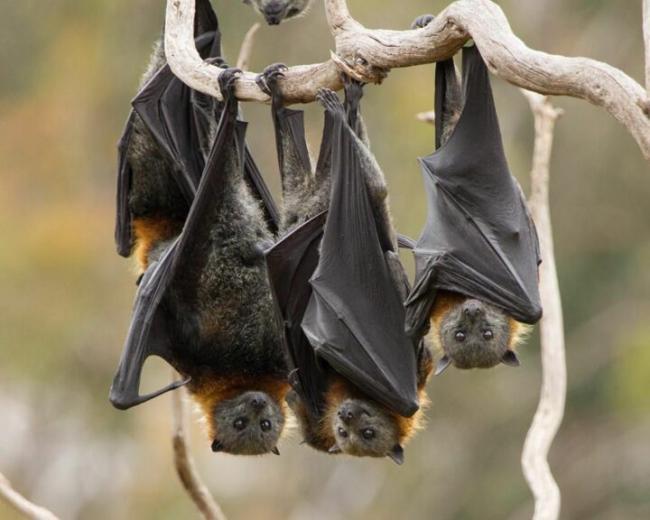 bats1.jpg