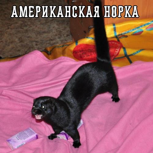 furmink.png