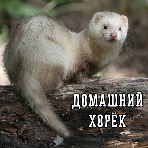 tailferret.png
