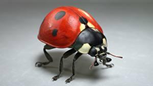 Ladybugs_Closeup_Jocelyn_Strob_Simard_Gray_596769_600x337.jpg