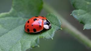 Ladybugs_Closeup_Foliage_595938_600x337.jpg
