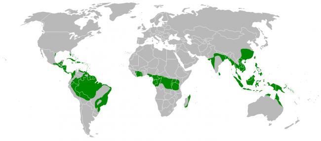 karta-vlazhnyh-ekvatorialnyh-lesov.png