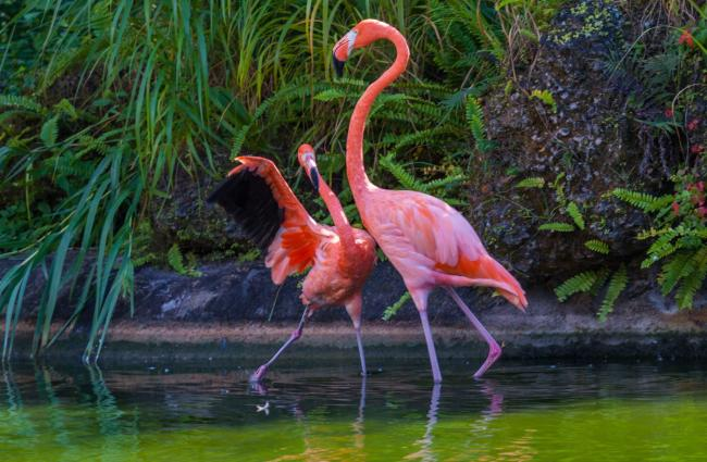 rozovyj_flamingo_31.jpg