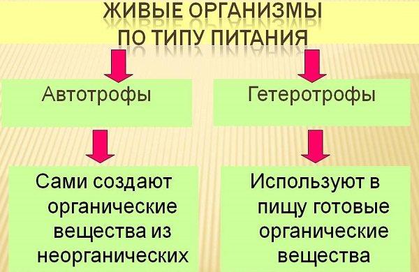 0005-005-zhivye-organizmy-po-tipu-pitanija.jpg