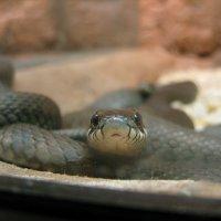grass-snake-care.jpg