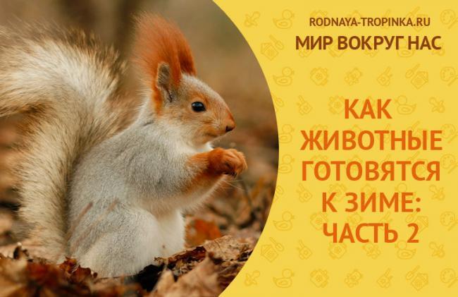 KAK-ZHIVOTNY-E-GOTOVYATSYA-K-ZIME_1.jpg