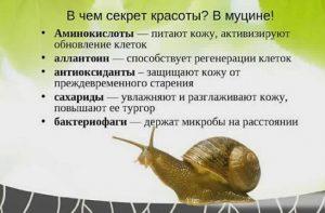 sostav-ulitochnogo-krema-300x197.jpg