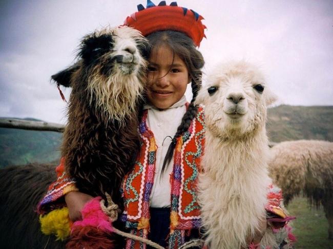 Домашние ламы
