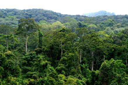 vlazhnye-vechnozelyonye-ekvatorialnye-lesa.jpg