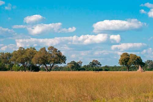 savanna-500x333.jpg