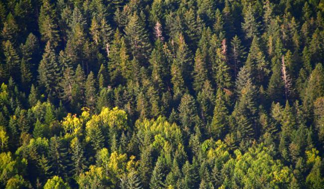 prirodnye-zony-lesov-34.jpg