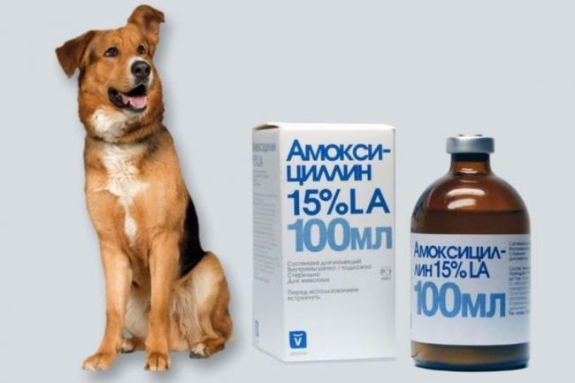 amoksicillin-dlya-sobak.jpg