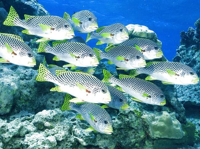 1600x1200_px_fish_fishes_nature_ocean_sea_sealife_underwater-1649145.jpg