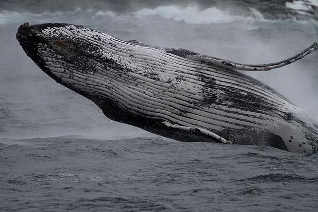 Marine-wildlife.jpg
