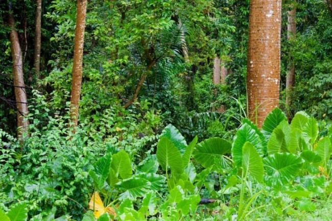 tropicheskie-lesa-dzhunglya-zelen.jpg