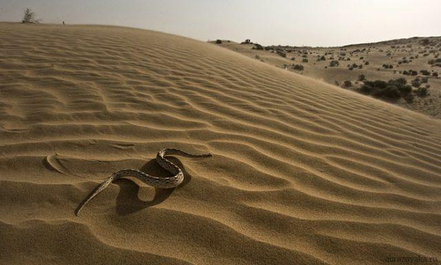 zmeya-v-pustyne-e1512851261539.jpg