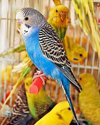 the-parrot-in-golden-branch--thumb4938432.jpg