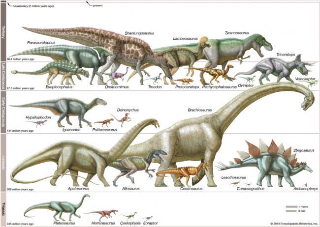 Mesozoic-Era-Age-of-Dinosaurs-periods-dinosaurs-1024x729.jpg
