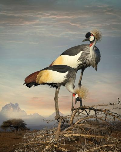 featheredmodels-1.jpg