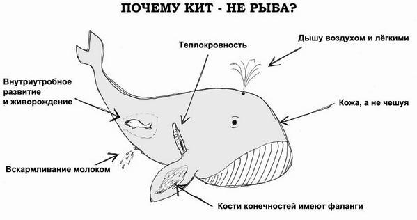 kit_004.jpg