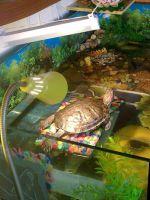 akvarium_dlya_cherepah.jpg