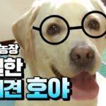 tv-animal-farm-review-ZUEh2THzQcQ-150x150.jpg
