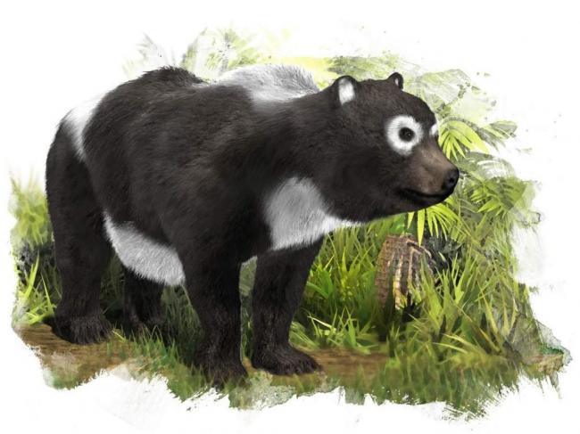 proishozhdenie-medvedej-animalreader.ru-005-1024x768.jpg