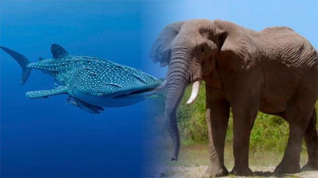 blue-whale.jpg